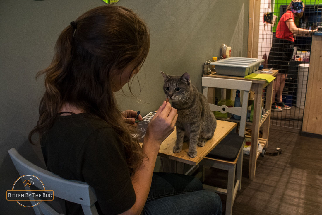 Cat café Brussels, Le New Chatouille