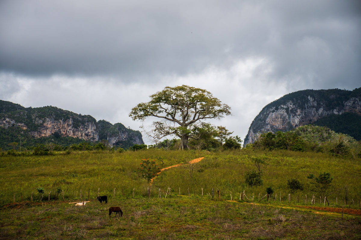 Bike tour in Vinales